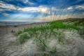Dunes Light  print