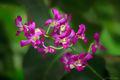 Purple Orchid print