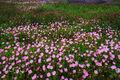 Wild Flower Meadow print