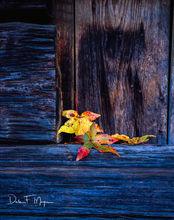 Fall 2009, Havana Arkansas, Hewn Logs, Old barn, 4X5 Fuji Film,  time gone by gallerie