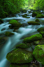 Great Smoky Mountains,Roaring Fork,moss rocks,running water