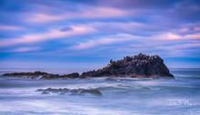 Newport Oregon, Oregon Gallery, Pelicans, Yaquina Bay, ocean