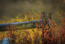 bog,fence post and weeds,fog,time gone by gallerie