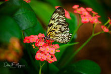Flora Gallerie,Florida keys,Tropical flowers,butterfly