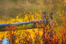 Central Arkansas bog, fall, fence post and weeds, time gone by gallery