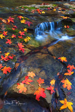 Maple and sweet gum leafs,North Arkansas,buffalo river,fall,water run