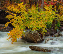 Arkansas, Fall 2018, falling water creek, Woodlands and trees gallery. Autumn Tree