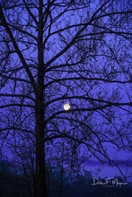 Cades Cove,Cottonwood Tree and Moon,Great Smokey Mountains,Spring 2013