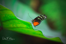 butterfly, Flora Gallerie, Florida keys, Tropical Plant Leaf