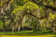 Live Oak Trees, Magnolia Gardens and Plantation, South Carolina, Southern Places Gallery, Spanish Moss