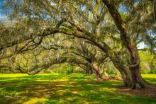 Live Oaks, Low Country, South Carolina, Southern Places Gallery