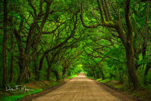 Deep South,Dirt Road,Edisto Island,Live Oaks,South Carolina,Summer 2013,woodlands and trees gallerie