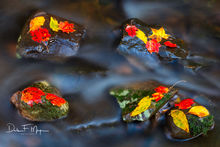 Fall 2018, River Streams and Waterfalls Gallery, buffalo National river, fall, leafs, rocks and running water