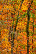 Arkansas, Fall 2018, ozark national forest, woodlands and trees gallery.