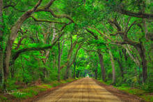 Botnay Bay Rd, Coastal Photos of the Eastren Seabord Gallery, Dirt Road, Edisto Island, Live Oaks