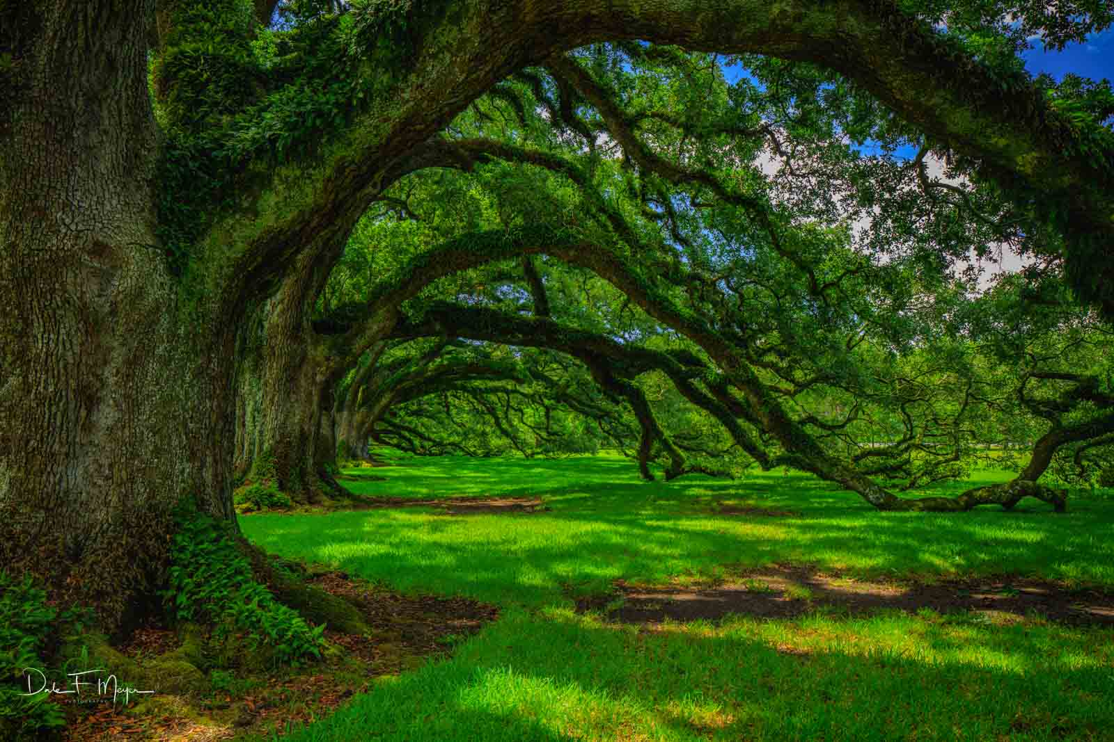 A spring day just after a rain storm had cleared under the Alley of Oaks at the Oak Alley Plantation in Vacherie LA. These Live...
