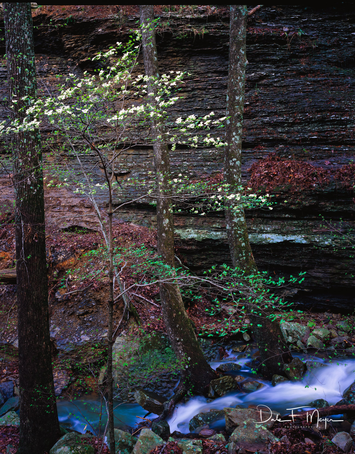 4X5 Fuji 50 Slide Film, Large Format, Ravine, Shale Rock, Stream, Valley, bluff, dogwood, spring 2009, water flow, photo