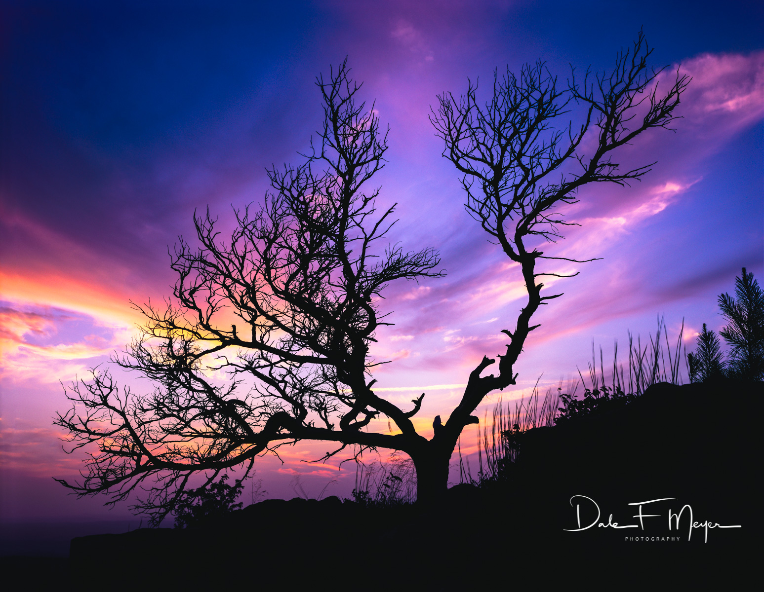 Bonsai Tree, Dead Standing Cedar Tree, Mount Magazine, summer 2008, sunset, woodlands and trees gallery