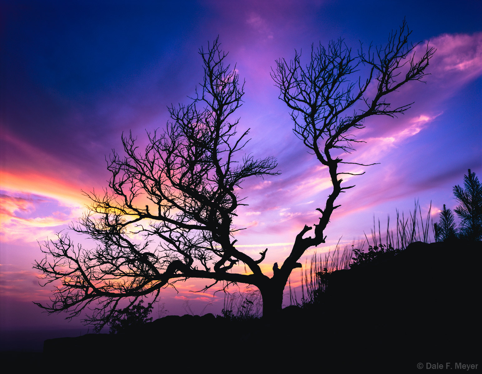 Bonzi Tree,Dead Standing Cedar Tree,Mount Magazine,summer 2008,sunset,woodlands and trees gallerie, photo