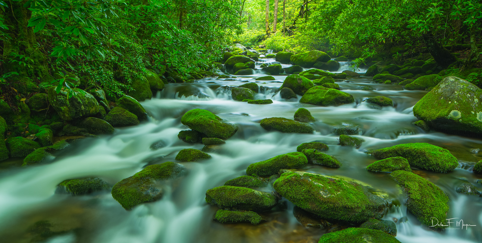 There are places on the Roaring Fork that are just simply beautiful beyond even what this photo can totally reveal. The mosses...