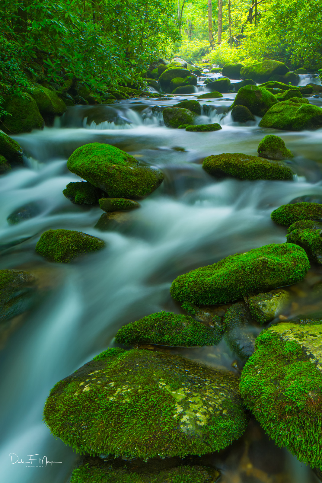 Great Smoky Mountains,Roaring Fork,moss rocks,running water, photo