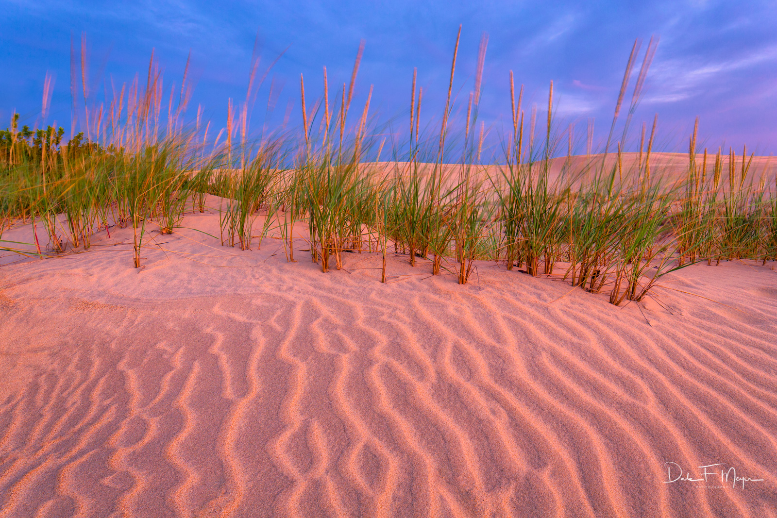 American Beach Grass, Evening Light, Jockeys Ridge NC, Sand Dunes., photo