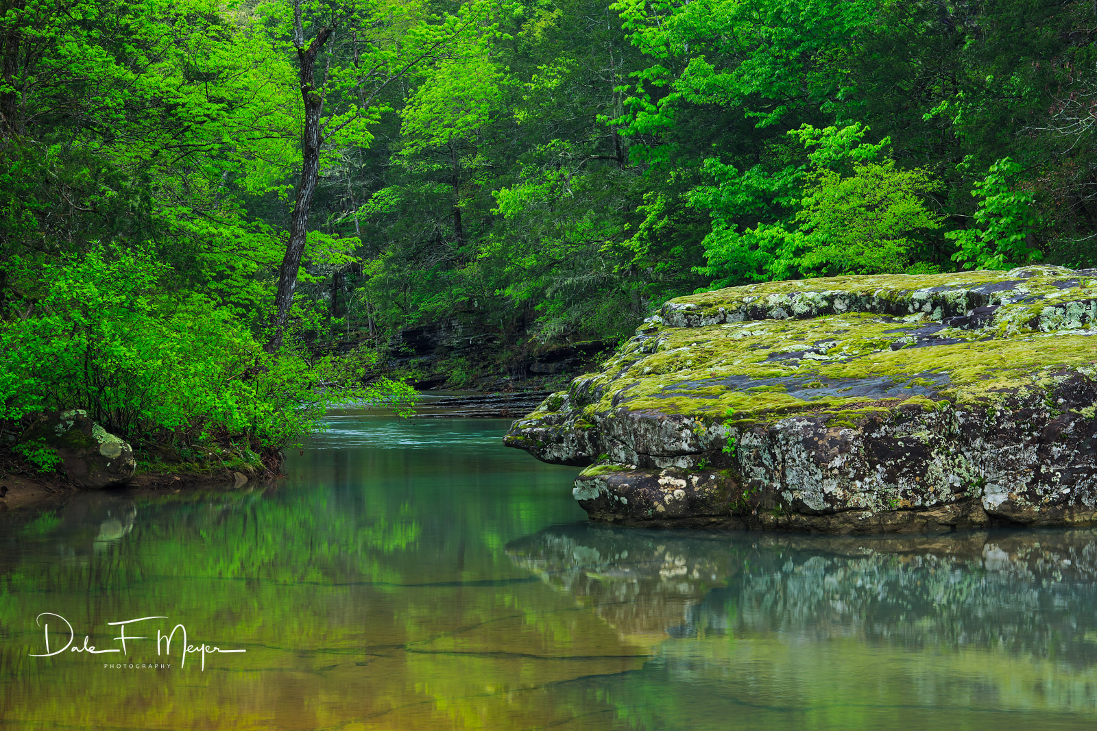 Moss covered boulder in Richland Creek North Arkansas with very still water reflecting the new green spring foilage just before...