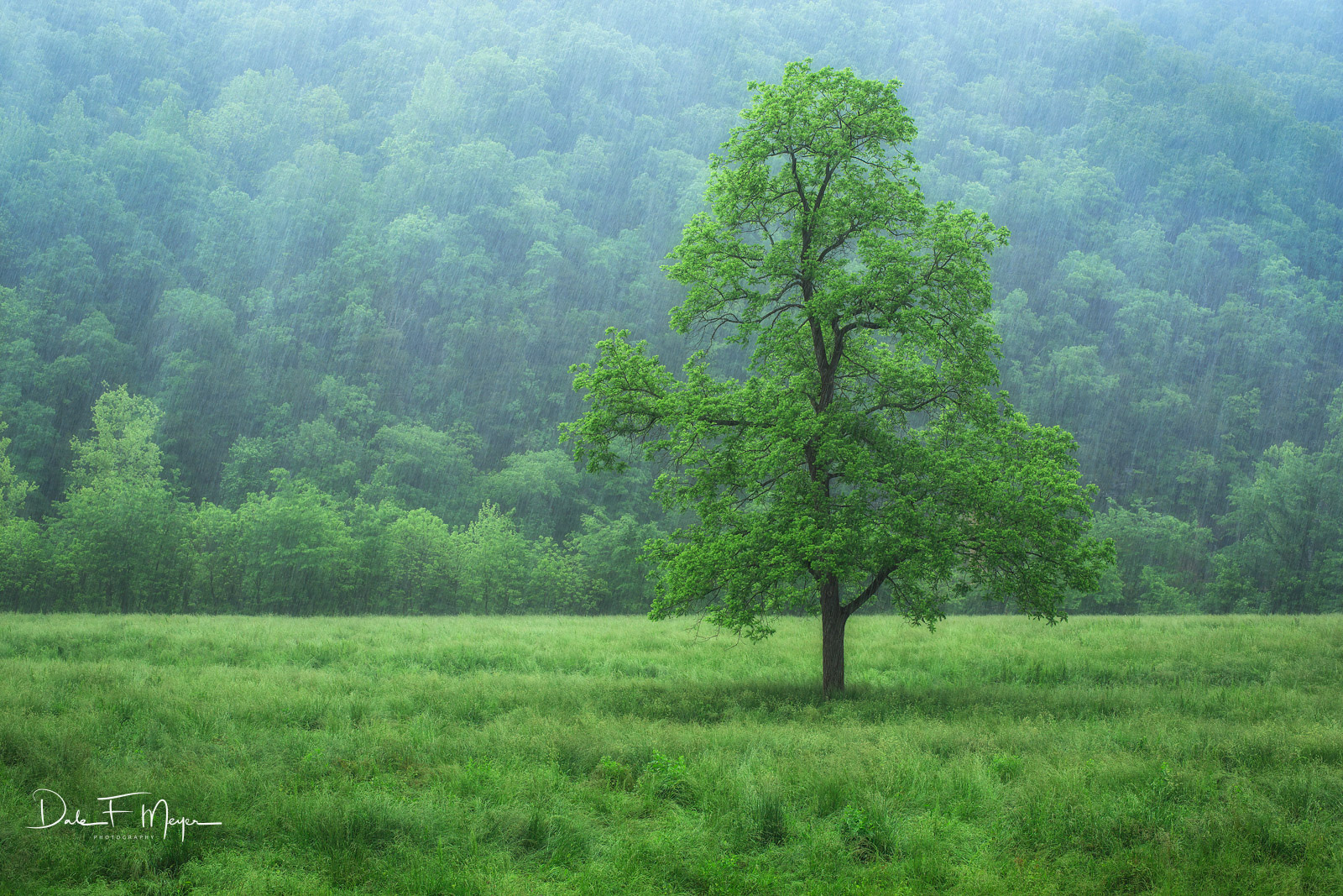 North Arkansas, Boxley Valley, Tree in Rain, spring 2015, photo
