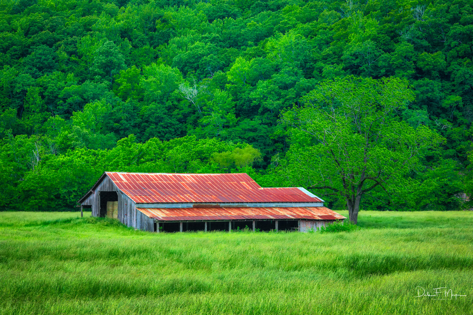 Old Barn in the Pnoca Valley of North Arkansas in the Springtime. Cloud filtered light and the field of fescue softened the image...