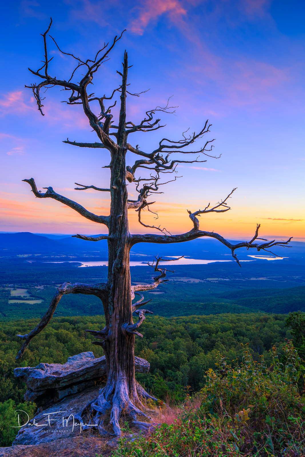 Dead Standing Tree,bluff,mt magazine,sunset, photo