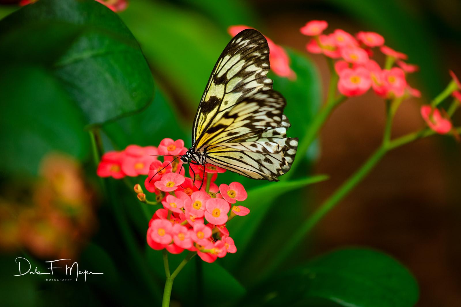Flora Gallerie,Florida keys,Tropical flowers,butterfly, photo
