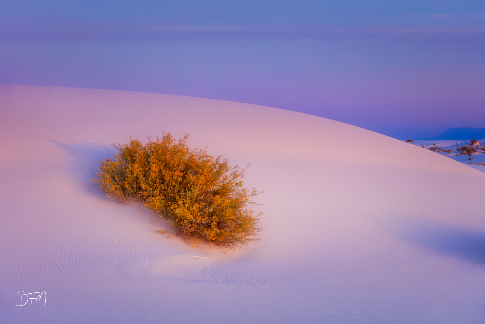A loneChamisa Shrub growing in theGypsum Dune of the White Sands National Park, New Mexico. This special mix of early...
