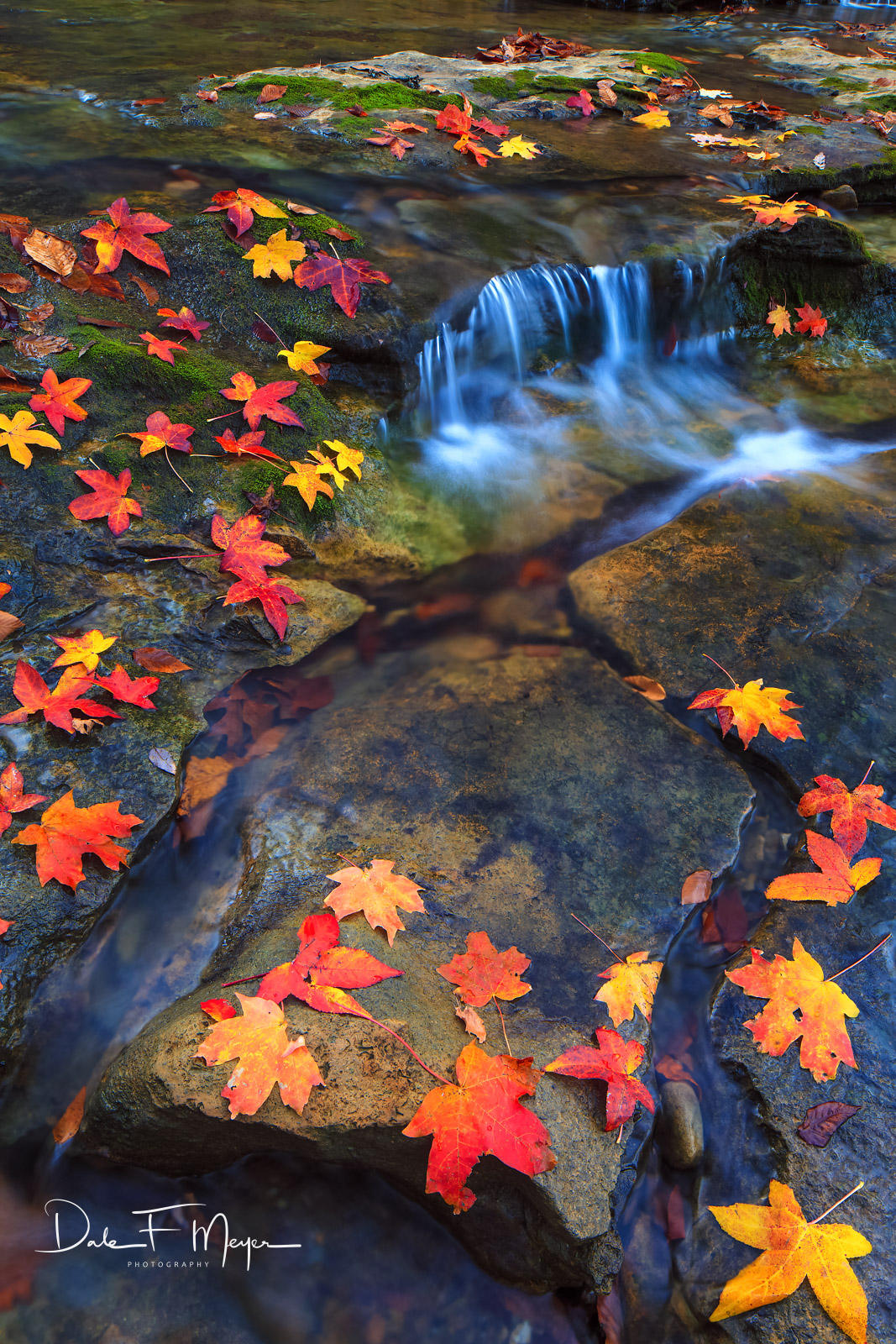 Maple and sweet gum leafs,North Arkansas,buffalo river,fall,water run, photo