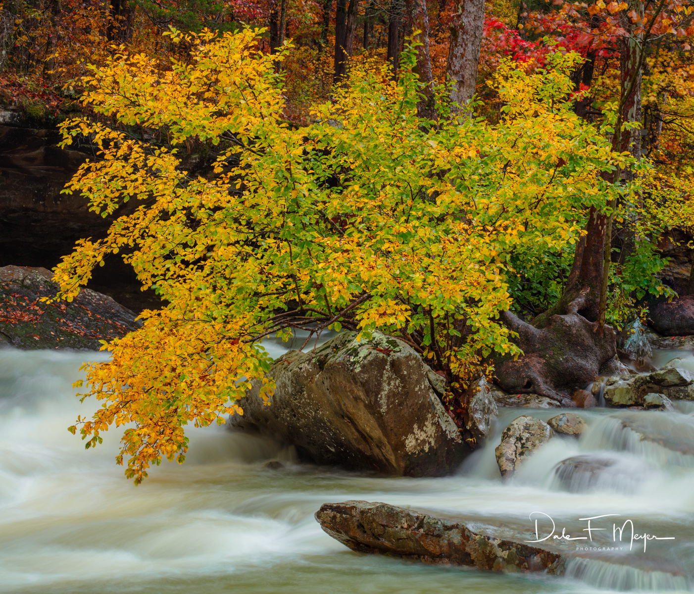 A beautiful tree in the rush of high water at peak fall color on Falling Water Creek Arkansas. This tree so reminded me of life...