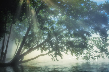 Fog on the White River early morning light and a cottonwood tree. The constant cold water of this crystal clearriver creates...