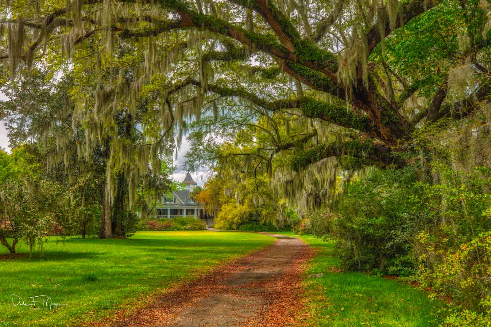 This is theDrayton family home, in theMagnolia Plantation. The plantation was founded in 1676. It is the third and...