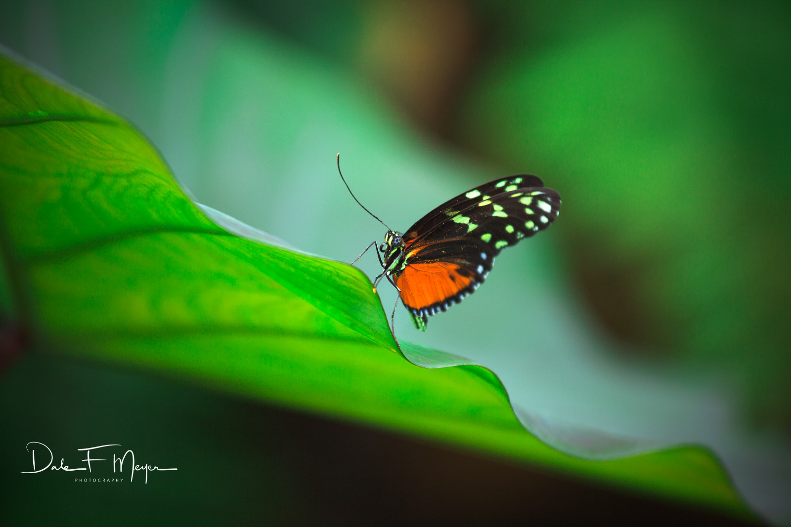 butterfly, Flora Gallerie, Florida keys, Tropical Plant Leaf, photo