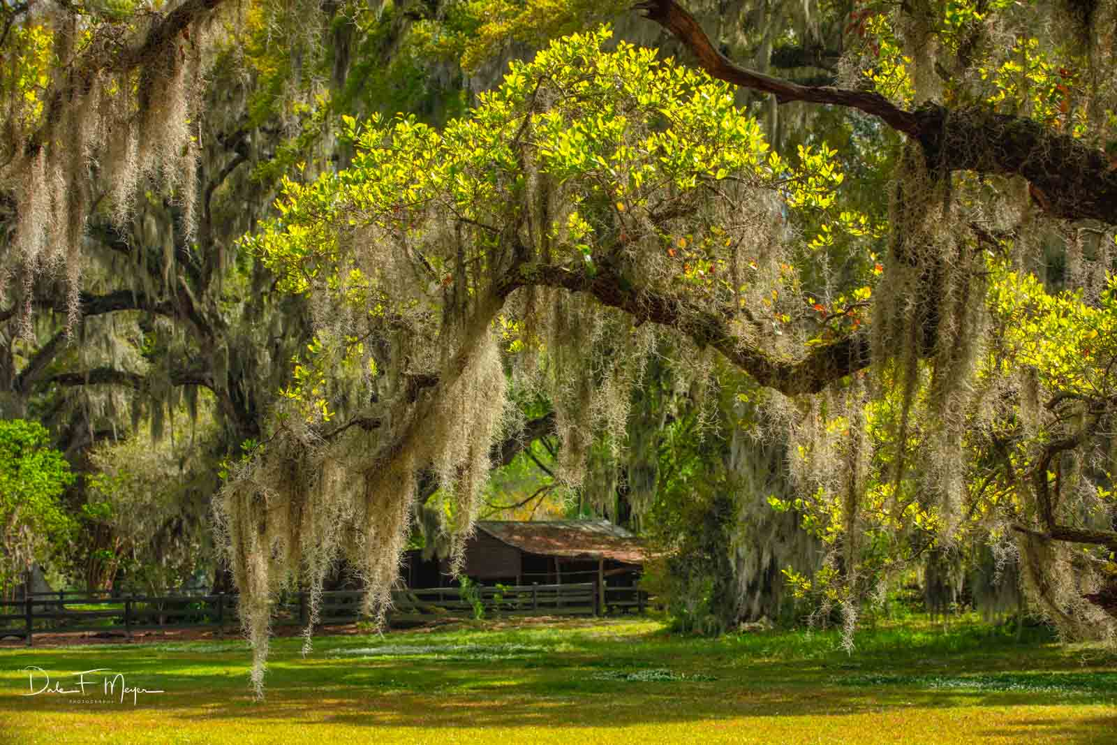 Magnolia Plantation and Gardens in the Low Country of South Carolina.An old barn dating to the early 1800's surrounded...