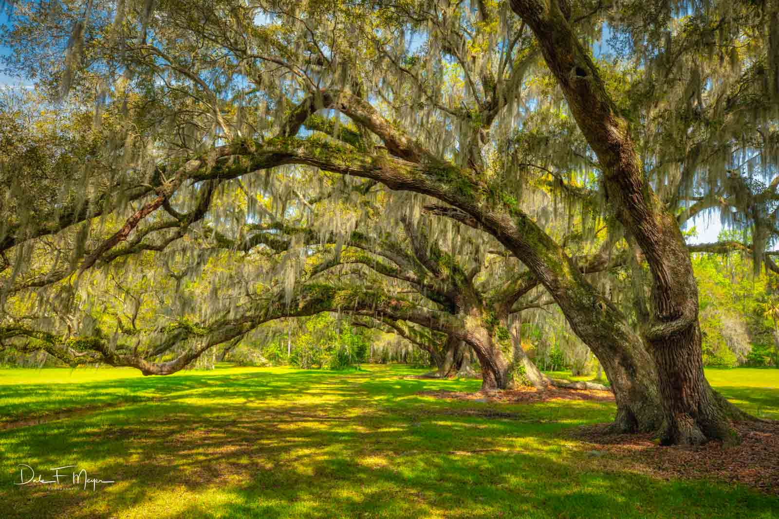 A row of very old Live Oak Trees in the low country of South Carolina near the Magnolia Gardens. I sat for a while in the shade...
