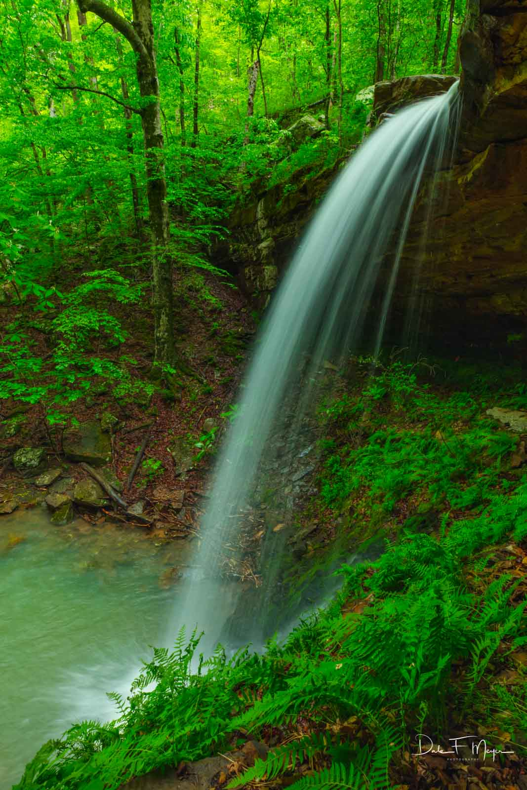 Mule Trail Falls,Upper Buffalo Wilderness Region Arkansas, and the beautiful ferns that grow at its basethriving...
