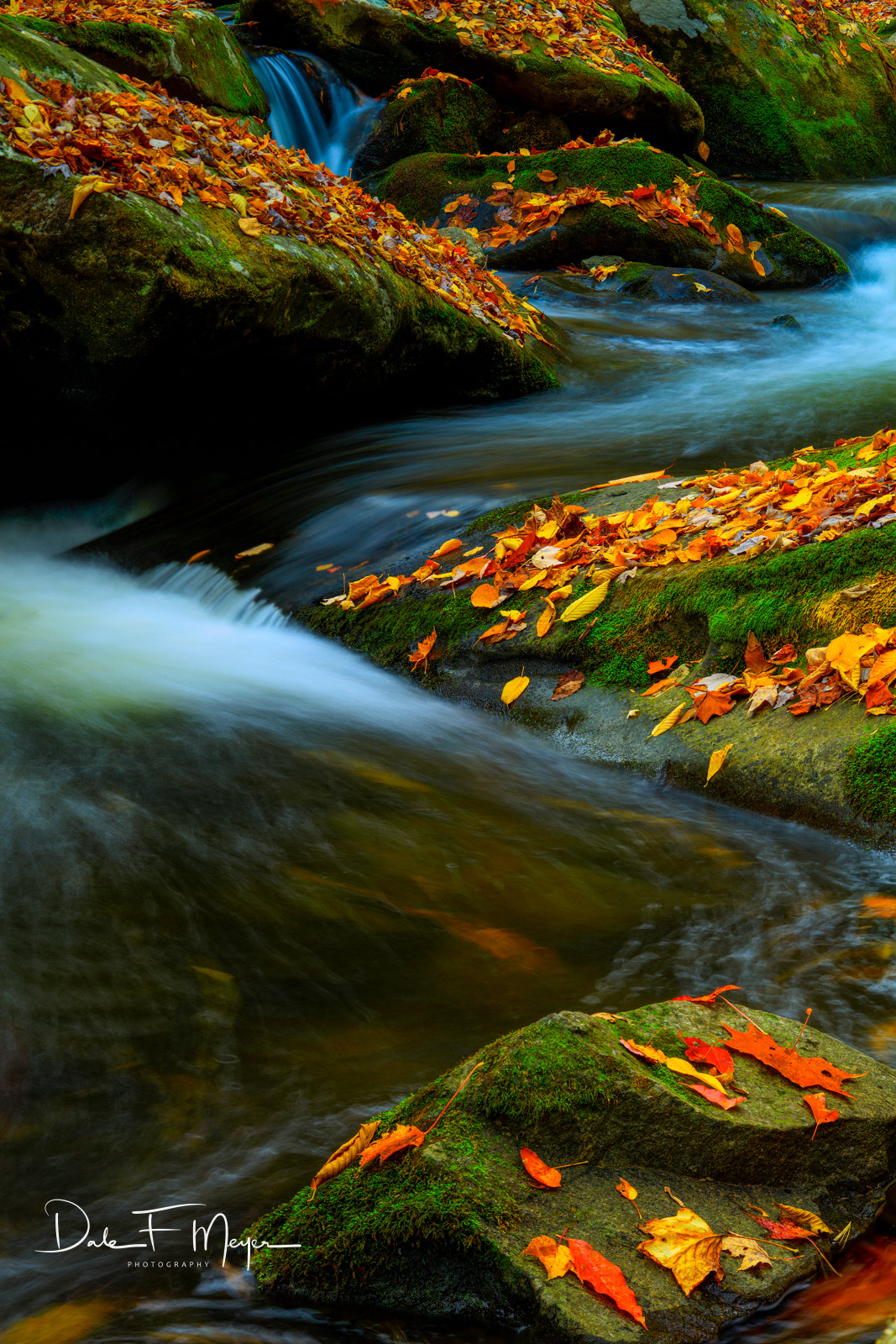 Fall 2015,Great Smokey Mountains,Middle Prong Little River, Tremount, rivers streams and waterfalls gallerie, Leafs, photo