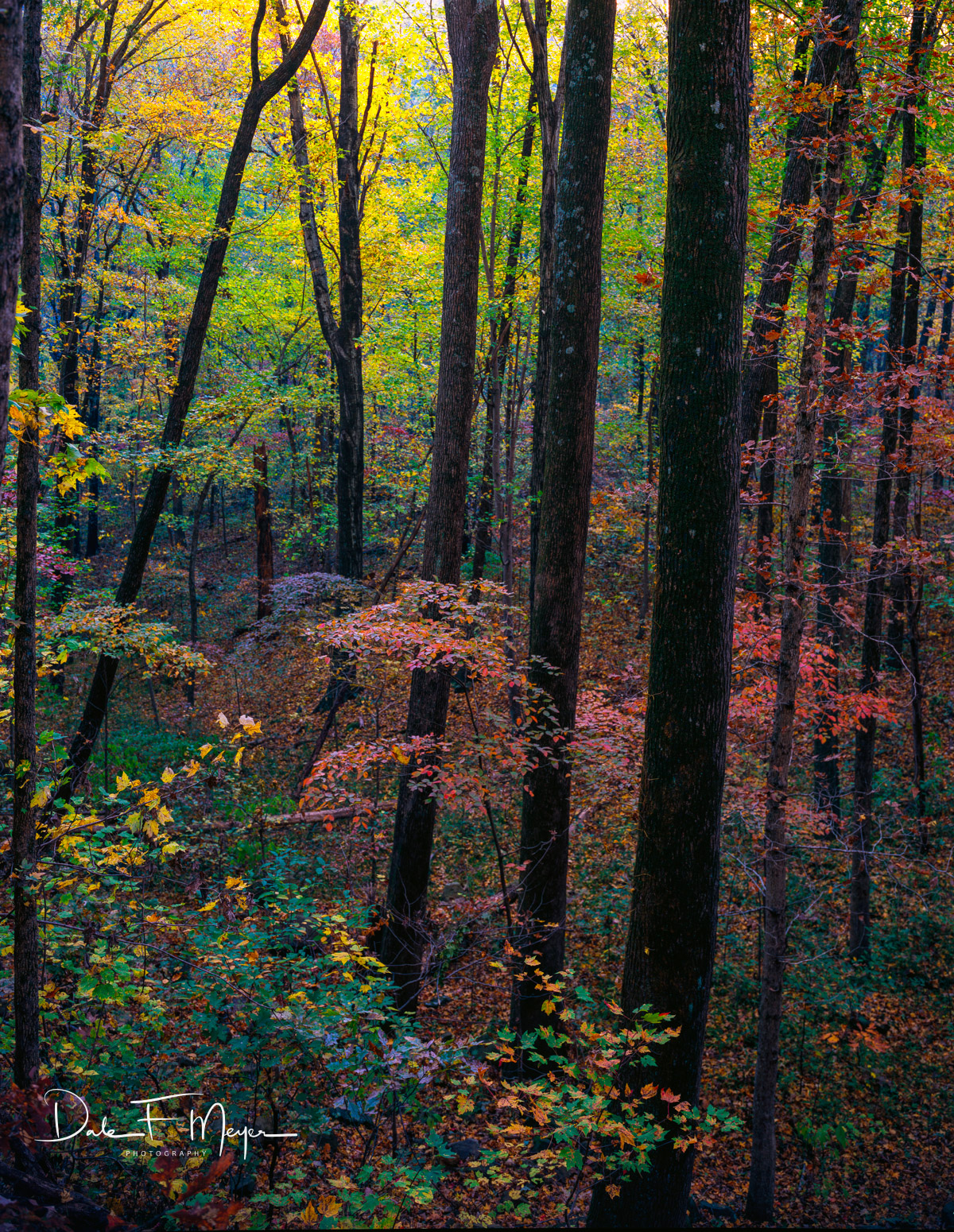 4X5 Fuji 50 Slide Film, Fall 2009, North Arkansas, woodlands and trees gallerie, photo