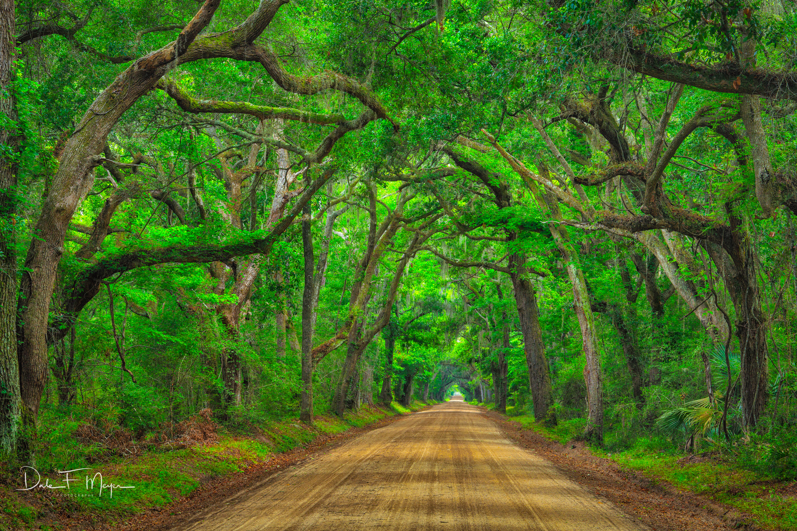Botnay Bay Rd, Coastal Photos of the Eastren Seabord Gallery, Dirt Road, Edisto Island, Live Oaks, photo